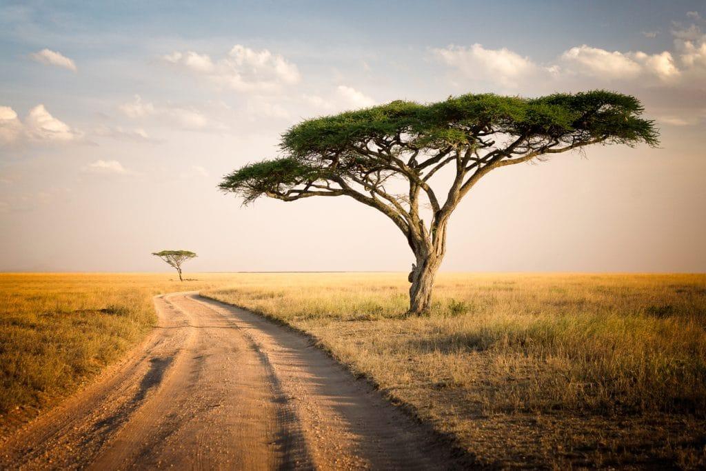 African Landscape - Tanzania